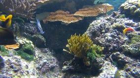 Oceaanvissen die rond Coral Reef zwemmen stock video