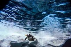 Oceaanwater met Koning Penguin die in de afstand zwemmen stock foto