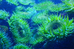 Oceaanzonnebloemen Royalty-vrije Stock Foto
