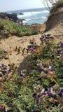 ocean ścieżki purpur kwiaty Zdjęcie Stock