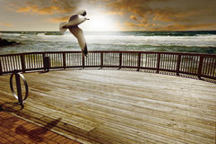 Ocean. A wooden deck with rail overlooks a rough ocean.  A seagull flies overhead.  This image could be a sunrise or a sunset Royalty Free Stock Photography