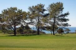 The ocean across the fairway. A view across the fairway, past the tall pine to the ocean beyond Royalty Free Stock Photos