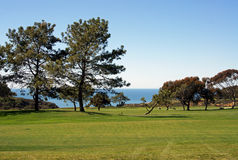 The ocean across the fairway. A view across the fairway, past the tall pine to the ocean beyond Stock Images