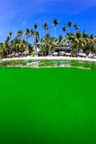 Ocean algae bloom and a tropical beach Royalty Free Stock Photography