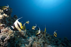 Free Ocean And Fish Royalty Free Stock Photography - 11431177