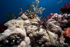 Free Ocean And Fish Stock Photos - 14043843