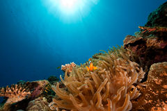 Ocean and anemone Royalty Free Stock Photography