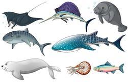Free Ocean Animals Royalty Free Stock Photos - 50446068