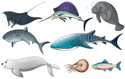 Ocean animals Royalty Free Stock Photos