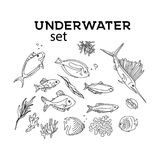 Ocean animals underwater sketch. Monochrome fish line art. Summer tropical food. Deep water illustration for restaurant. Shop. wrap, cloth, advertising Stock Image