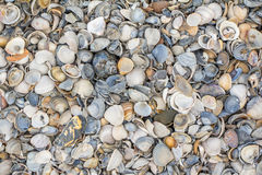 Ocean background. Seashells background with brown and grey colors royalty free stock images