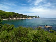Ocean bay with pines. Ocean bay landscape with pines and blue sky and green meadow Stock Photography