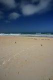 Ocean Beach. A ailse made from shells on Ocean Beach, New Zealand stock images