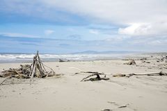 Ocean beach with dry woods Royalty Free Stock Images
