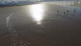 Ocean beach, Marina del Rey, California during sunset. Steadicam shot stock video footage
