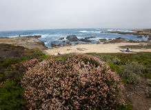 Ocean beach and meadow near 17 miles drive Royalty Free Stock Images