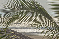 Ocean beach with palm leaf Royalty Free Stock Photo