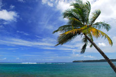 Ocean beach scene with a palm tree Stock Images