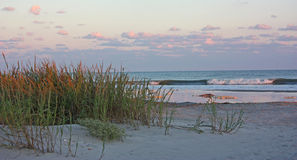 Ocean beach with sea oats at sunset. Royalty Free Stock Image
