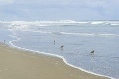 Ocean Beach State Beach, San Francisco. CA stock images
