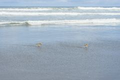 Ocean Beach State Beach, San Francisco. CA stock photography