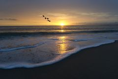 Ocean Beach Sunset Birds Flying Royalty Free Stock Photos