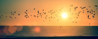 Ocean beach at sunset with silhouettes of seagulls. Panorama ocean beach at sunset with silhouettes of seagulls Stock Photo