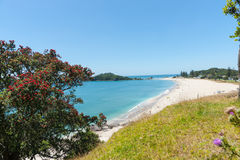 Ocean beach view over and framed by pohutukawa tree Royalty Free Stock Images