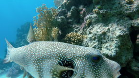 Ocean, The beauty of the underwater world. stock video footage