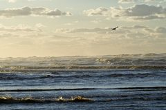 Ocean with Bird and Clouds Stock Photography