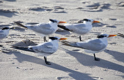 Ocean Bird Family Royalty Free Stock Photos