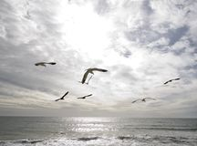 Ocean and Birds Royalty Free Stock Image
