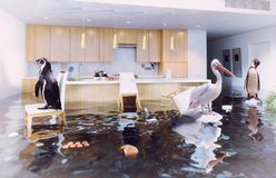 Birds in the flooding kitchen. Ocean birds in the flooding kitchen interior. Creative media mixes concept Stock Images