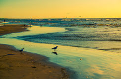 Ocean birds watching sunset Royalty Free Stock Photography