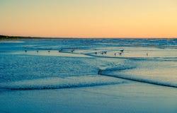 Ocean birds watching sunset Royalty Free Stock Image