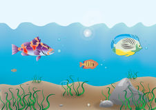 Ocean bottom. Illustration of the ocean bottom with sea grass and fishes Stock Image