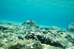 Ocean bottom Royalty Free Stock Images