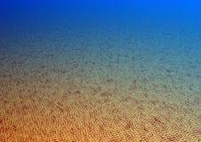 Ocean Bottom Stock Photo