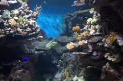 Ocean bottom Stock Photography