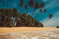 Ocean Coast with coconut palm trees. Tropical vacation, nature background. Soft wave on wild deserted untouched beach. Paradise id. Yllic landscape. Travel to Stock Image