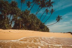Ocean Coast with coconut palm trees. Tropical vacation, nature background. Soft wave on wild deserted untouched beach. Paradise id. Yllic landscape. Travel Stock Photography