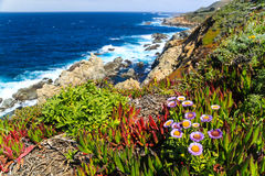 Ocean coast with green and red vegetation Stock Photo