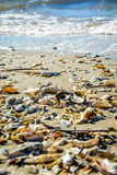 Ocean coast seashells Stock Photo