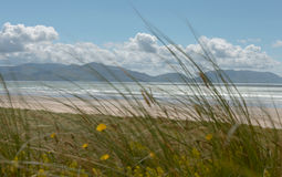 Ocean coastline with distant mountains seen through green grass Royalty Free Stock Photography