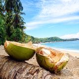 Ocean coconut Stock Images
