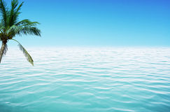 Ocean and coconut. Coconut palm tree on a sandy beach by the ocean royalty free stock photo