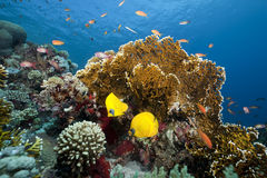 Ocean and coral. Taken in the red sea Stock Photos