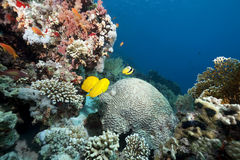 Ocean and coral. Taken in the red sea Royalty Free Stock Image