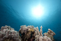 Ocean and coral Royalty Free Stock Photography