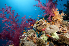 Free Ocean, Coral And Fish Royalty Free Stock Photos - 12541468